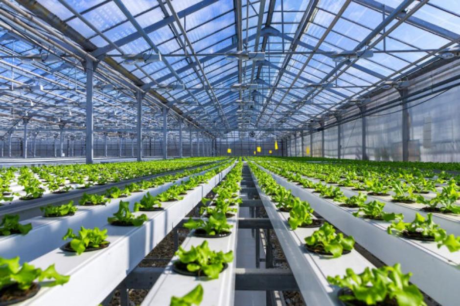 Produkcja warzyw szklarniowych w Rosji dynamicznie rośnie