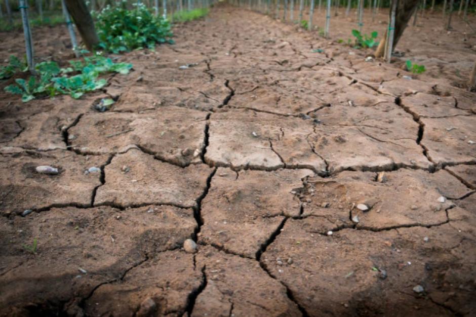 IUNG: susza rolnicza coraz mniejsza