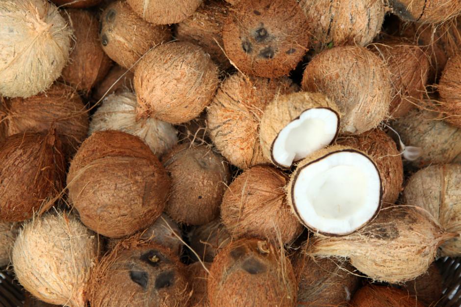 Supermarkety w Wlk. Brytanii rezygnują ze sprzedaży wyrobów z kokosów zbieranych przez małpy