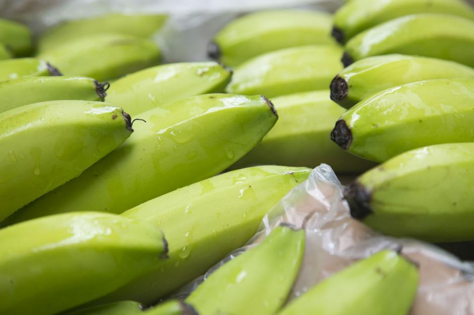 Bananowy odpowiednik Covid-19 niszczy plantacje na całym świecie