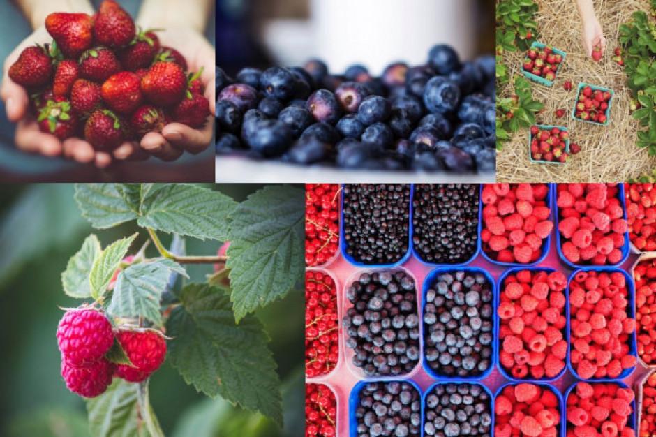 Ceny warzyw i owoców w hurcie zaskakują
