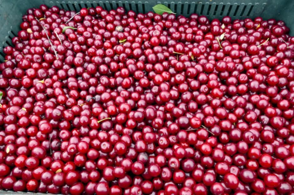 Niepewność na rynku wiśni