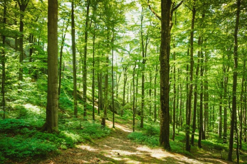 Można uzyskać dofinansowanie do sadzenia lasów na gruntach rolnych