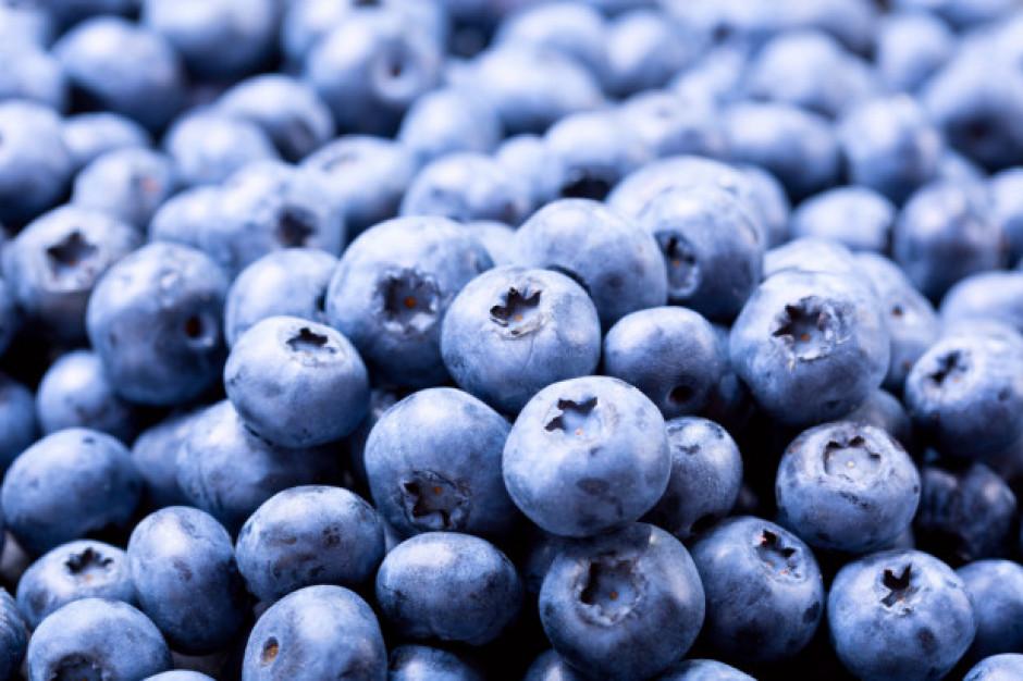 Borówka - ulubionym owocem dietetyków