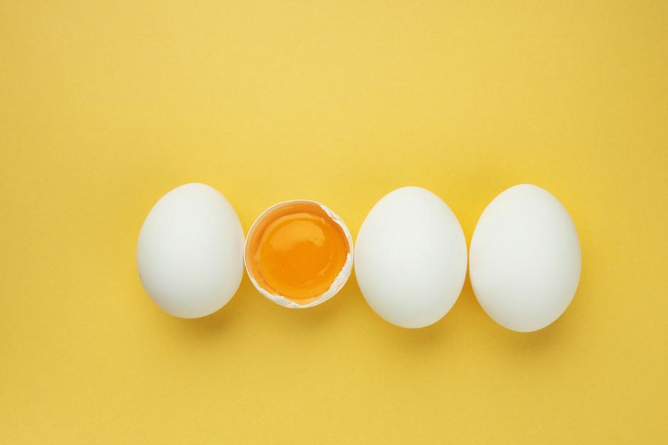 Historyczny rekord eksportu przetworów jajecznych z Polski