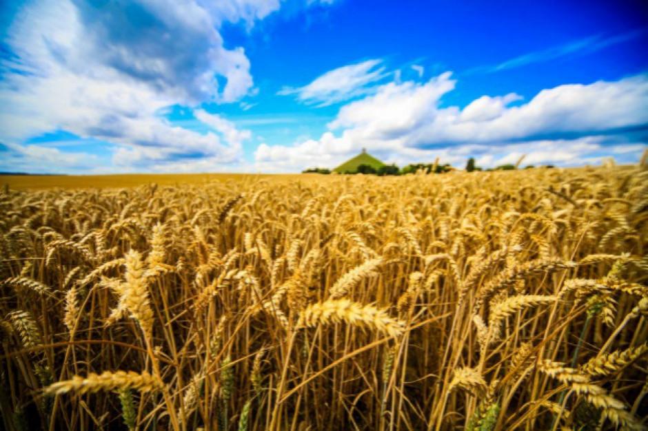 KSG Agro zwiększył plony wczesnych zbóż nawet o 52 proc.