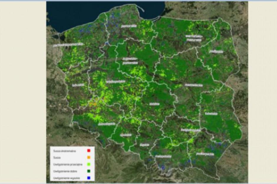 KOWR udostępnił geoserwis wspierający monitoring suszy rolniczej i ocenę strat w plonach