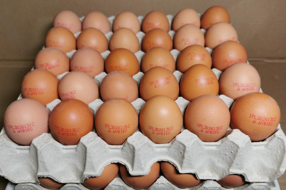 Wielkopolska: Salmonella na fermie kur niosek. Jaja wycofano z obrotu