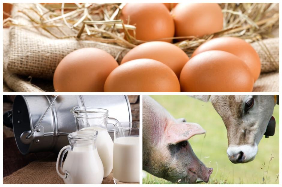 GUS podał fizyczne rozmiary produkcji zwierzęcej w 2019 r: wzrost produkcji mleka i jaj, a żywca rzeźnego bez zmian