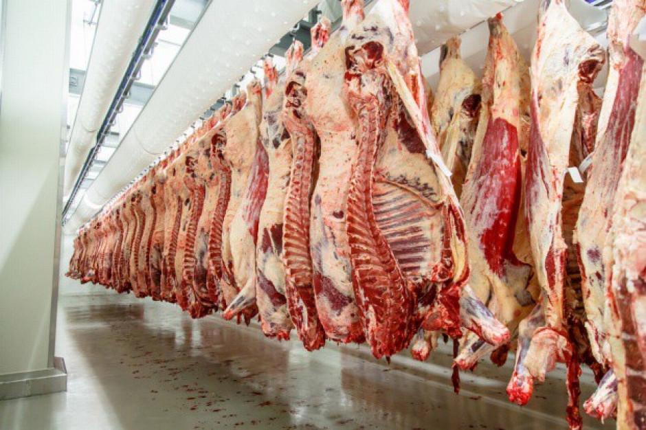 Rada Sektora Wołowiny przeciwna wprowadzeniu ograniczeń uboju rytualnego