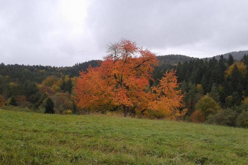 We wtorek rozpocznie się astronomiczna jesień