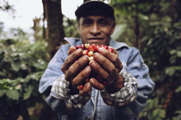 Plantatorzy kawy zmagają się ze skutkami kryzysu klimatycznego i pandemią