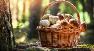 Włochy: Konfiskata zbiorów i kontrole wśród uczestników grzybobrania