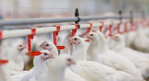 Koalicja Polska zbiera podpisy pod apelem o weto dla noweli ustawy o ochronie zwierząt