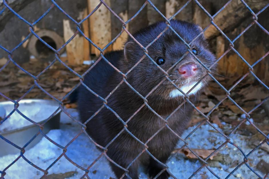 Francja zakazuje występów dzikich zwierząt w cyrkach oraz hodowli norek na futra