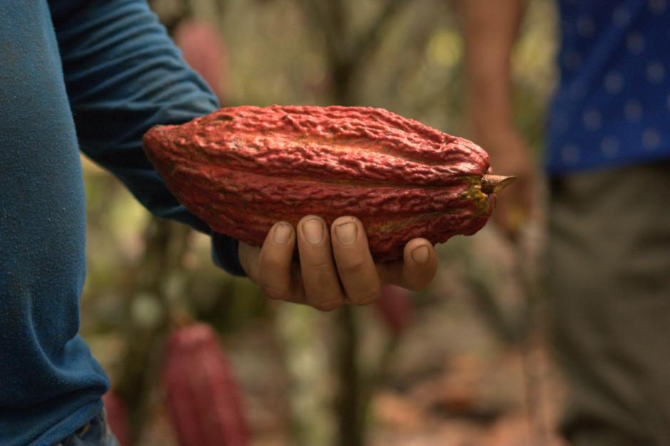 1.10. przypada Światowy Dzień Kakao. Mars zainwestował w strategię