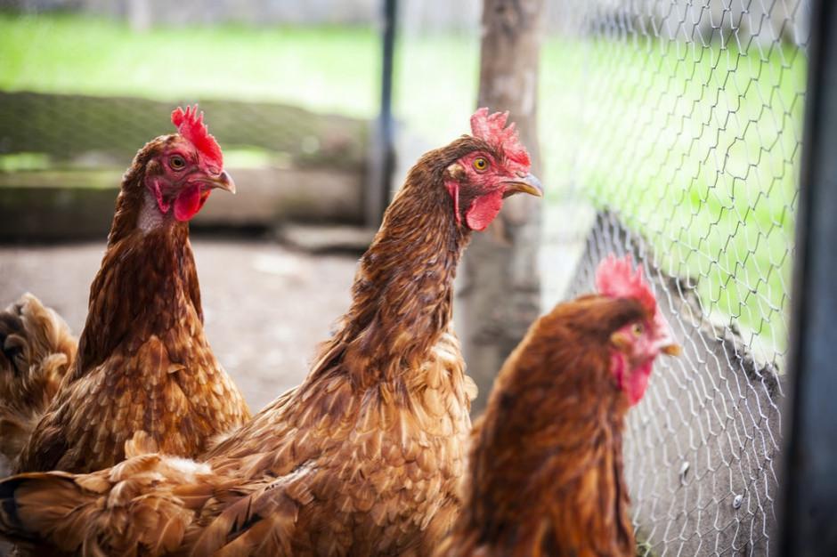 Fogiel: rekomendujemy, by w Senacie ustawa o ochronie zwierząt nie została zmieniona