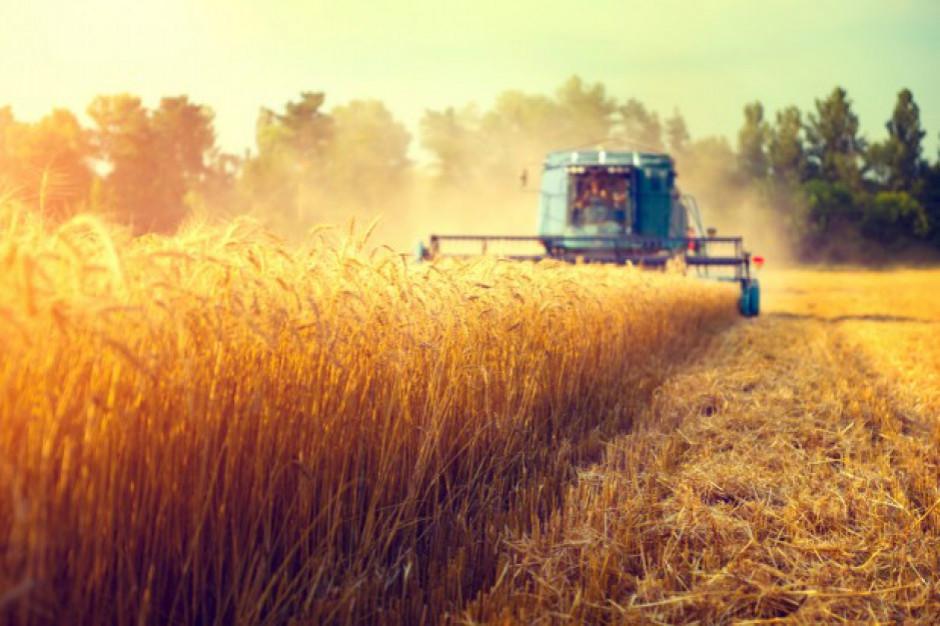 Wicedyrektor KOWR: wysokie zbiory zbóż dzięki sprzyjającej pogodzie