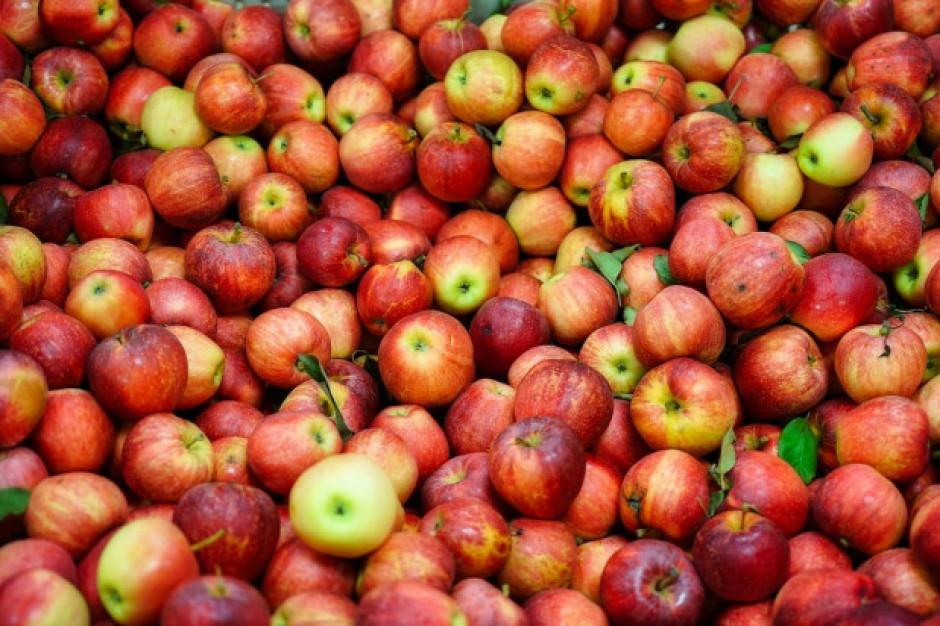 Serbia ruszy z eksportem jabłek do Indii