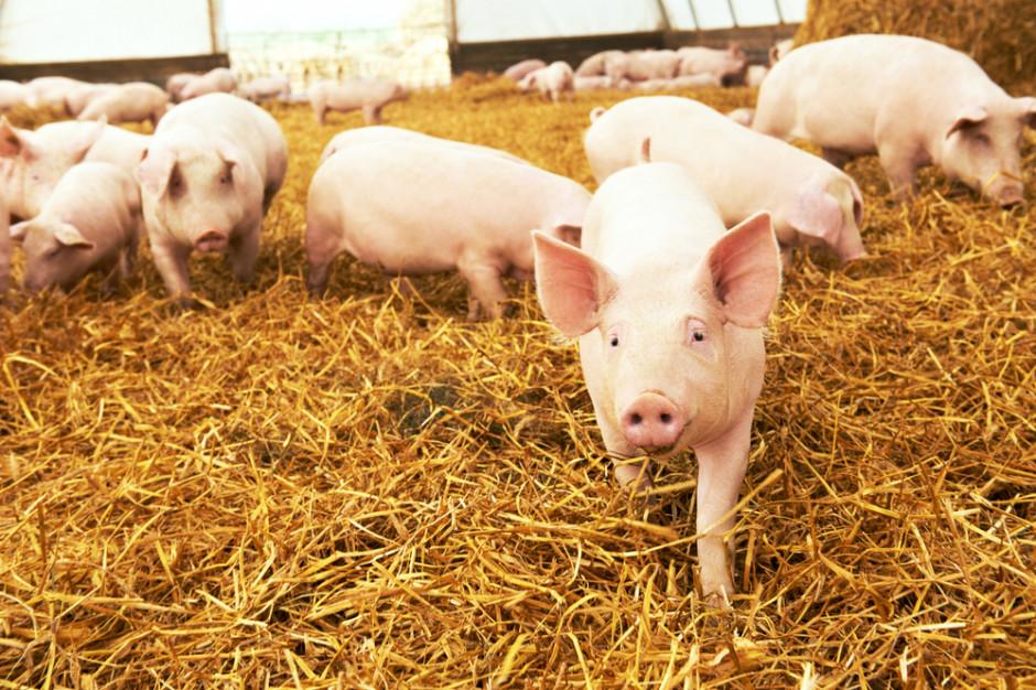 KSG Agro chce zbudować własną fermę zarodową
