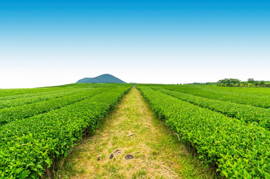 Zmiany klimatu negatywnie wpływają na bezpieczeństwo żywnościowe (raport)