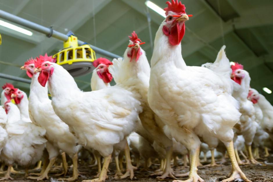 Główny Lekarz Weterynarii ostrzega przed wysoce zjadliwą grypą ptaków
