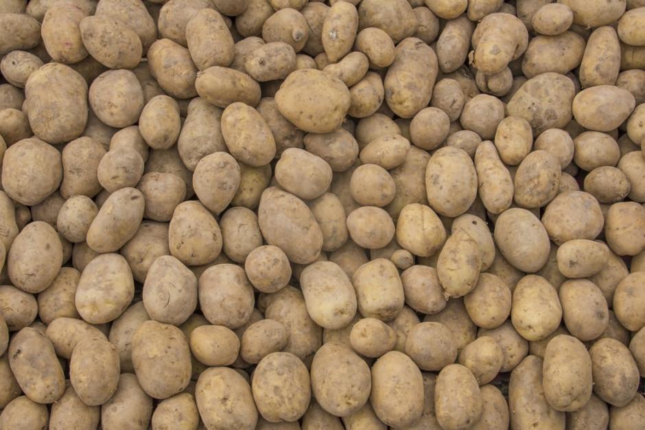 Ekspert: ziemniaki jednych z najpopularniejszych produktów w diecie bezglutenowej