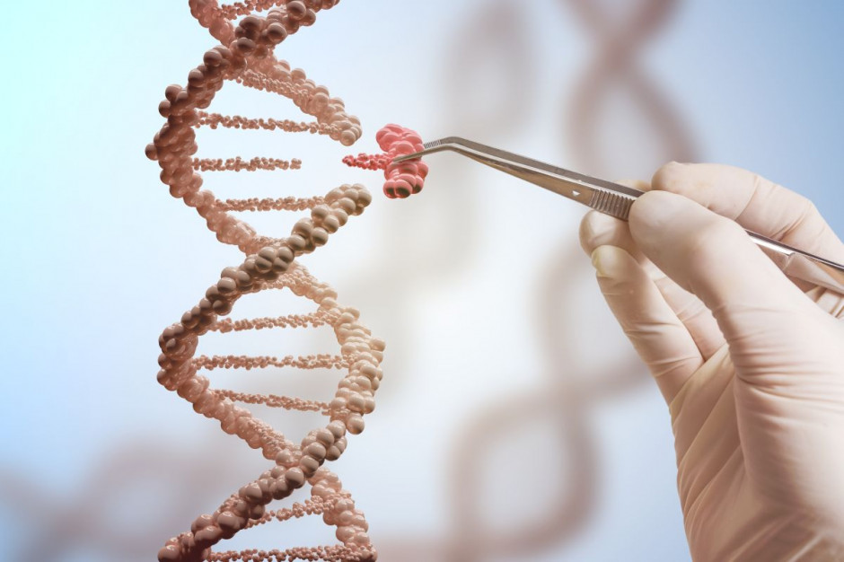 Sejm: przesunięcie terminu wejścia w życie zakazu stosowania pasz genetycznie modyfikowanych do 1 stycznia 2023 r.