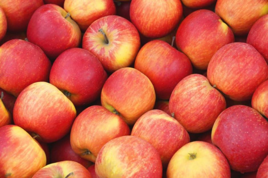 Rynek jabłek 2020: Jakie ceny i popyt na sortowanie?