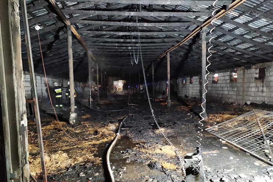 Lubelskie: Na fermie drobiu spłonęło 18 tysięcy perliczek