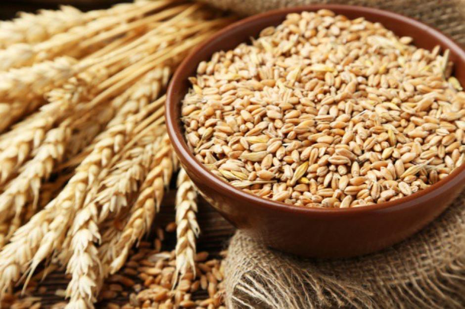 Zbiory zbóż w 2020 wzrosły o ok. 16 proc. rdr, do 33,5 mln ton