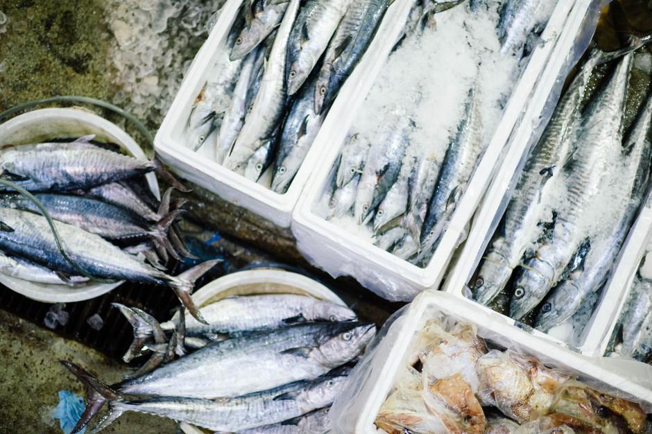 Dębicka, MSC: 1/3 dziko żyjących stad ryb jest nadmiernie poławiana