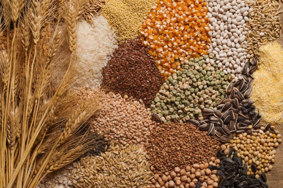 KOWR: mimo obaw, dobre zbiory zbóż i pozostałych płodów rolnych w 2020 r.