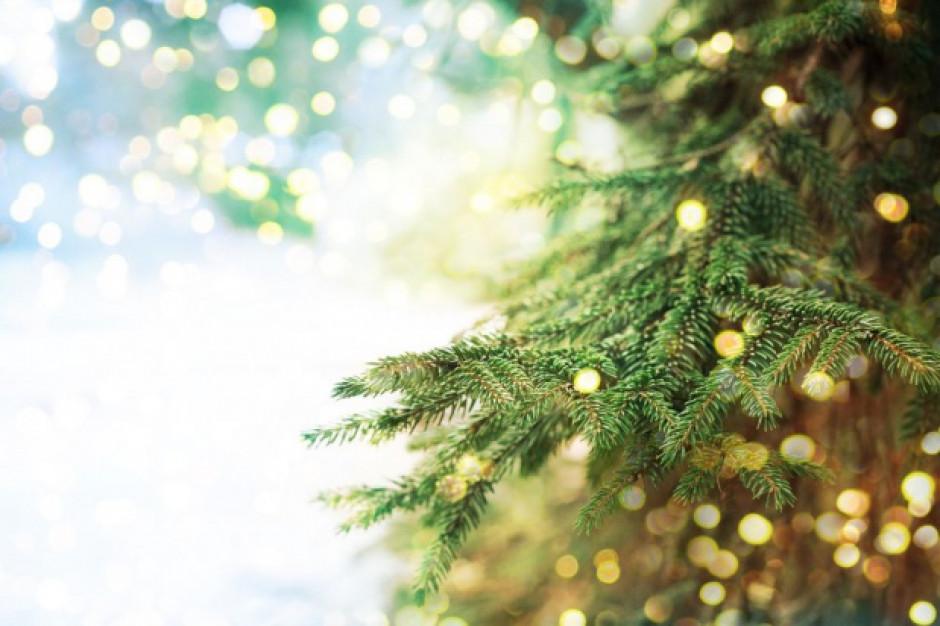 Lasy Państwowe: choinka po świętach nie musi trafić do śmietnika