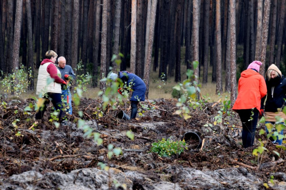 Poczta Polska iLasy Państwowe zawarły porozumienie dot. przedsięwzięć prośrodowiskowych
