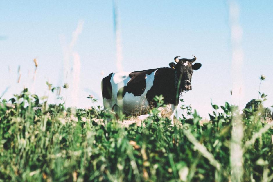 Co strategia Od Pola do Stołu przyniesie polskiemu mleczarstwu?