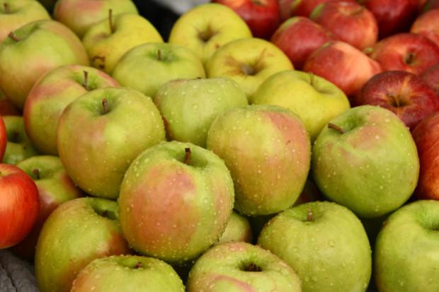 Biedronka promuję ofertę bio owoców i warzyw