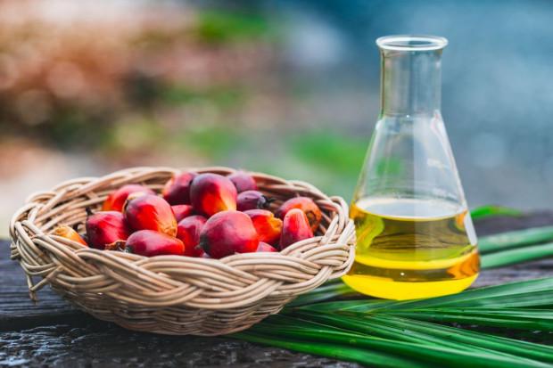 1 lutego obchodzimy Międzynarodowy Dzień bez Oleju Palmowego