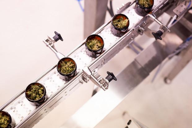 Producent medycznej marihuany rusza z crowdfundingiem, planuje debiut  na giełdzie