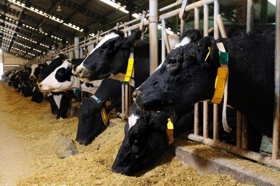 2,5 mln zł kary od UOKiK za zmowę producentów pasz dla zwierząt