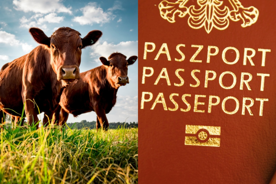 Paszportyzacja żywności - wydmuszka czy as w rękawie?