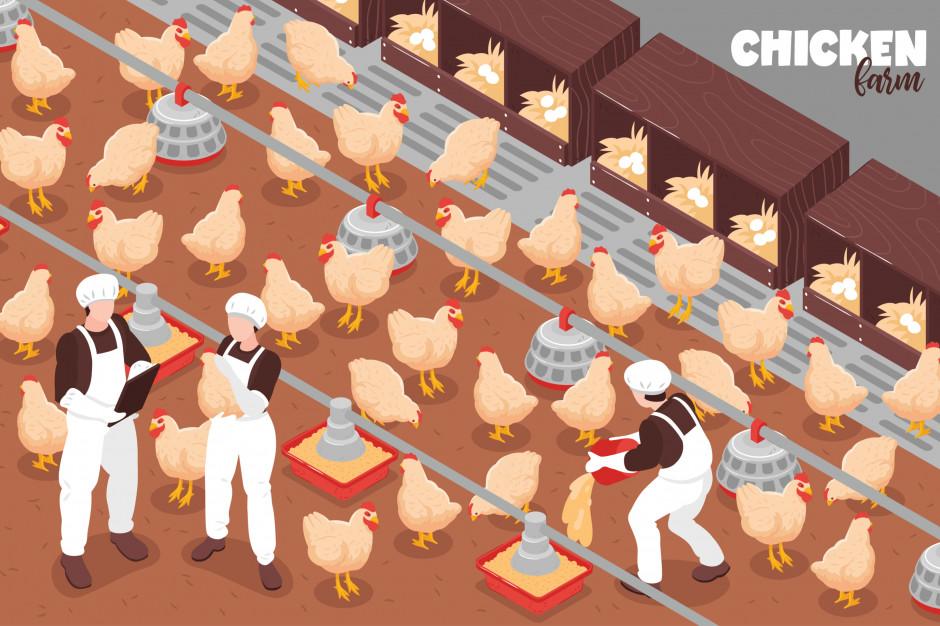 KRD-IG: Rok 2021 przyniósł nowe problemy dla drobiarstwa
