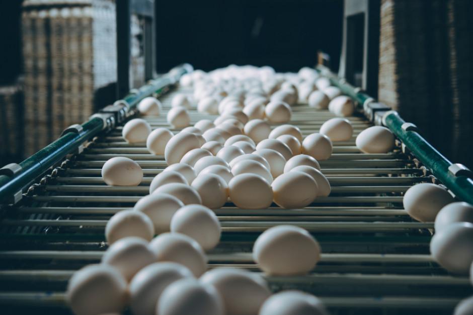 Branża alarmuje: Popyt na jaja zaczyna przewyższać podaż