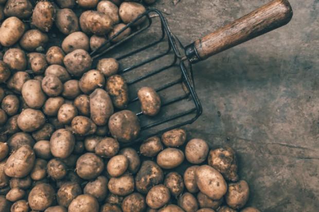 Nowoczesny zakład przetwórstwa ziemniaków powstanie na Lubelszczyźnie?