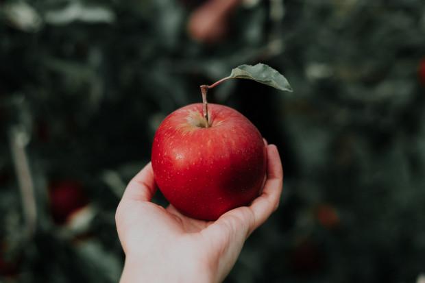 Polskie jabłka rozpoznawalne na Bliskim Wschodzie