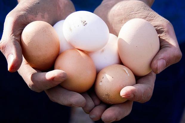 Nestle w Polsce stosuje wyłącznie jaja z chowu bezklatkowego
