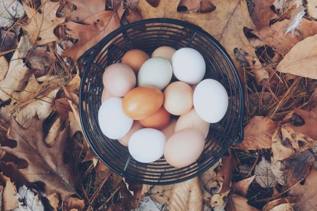 Drobiarze: handel powinien ponosić koszty poprawy dobrostanu kur