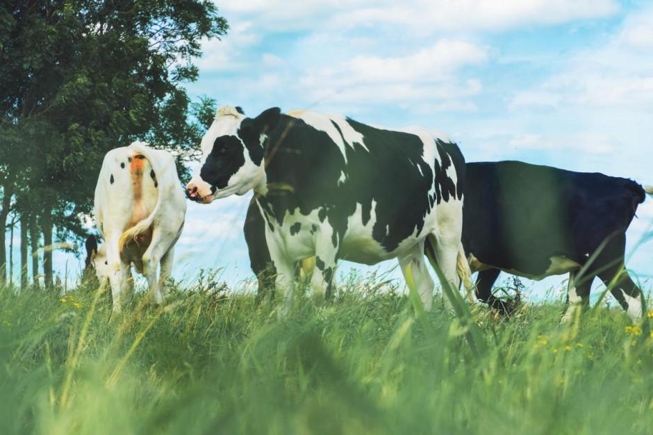Cena mleka w lutym wzrosła o ponad 8 proc. r/r