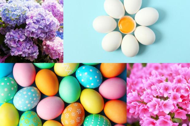 W Broniszach jaja, pisanki, hortensje i azalie