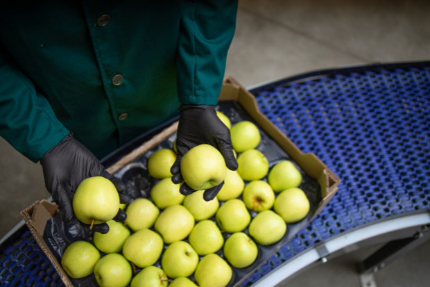 Rosja importuje coraz mniej jabłek